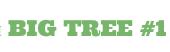 Big Tree - курси англійської мови